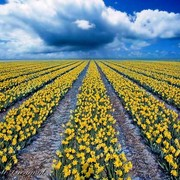 Spring_fields-web_card