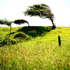 Trees-cuckmere-1a_copy_thumb