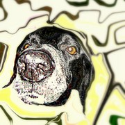 Portrait_of_homer_my_dog_card