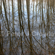 Colorfineart-coventrytreeslaidlawparkrefletion-d-17-09-37_card