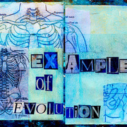 Examples_of_evolution_card
