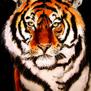 Tigre_card