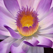 Inside_the_waterlilly_card