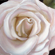 White-rose-b_card