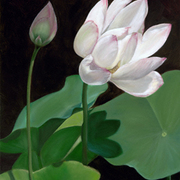 Blooming_lotus_blossom_card