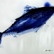 Blue-fish_2_copy_card