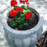 Flower_pot_copy_card