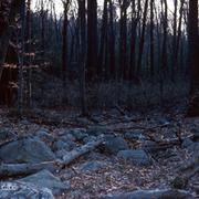 Montville_woods_card
