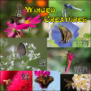 Winged_creatures_cd_card