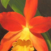 Orange-cattleya_card