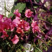 Flora_card