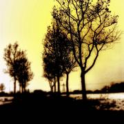 Viale_del_tramonto_card