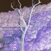 Invert_tree_card