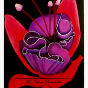 Tropical_beauty_card