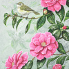 Chiffchaff-and-camelia_thumb