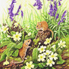 Dormice-primroses-bluebells_thumb