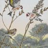 Goldfinches_thumb