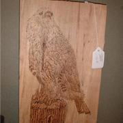 Red_tail_hawk_card