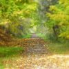 October_path_2007_sharp_focus_glow_cropenhance_thumb