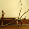 Driftwood_table_a_thumb