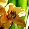 Orchid_2___2024_thumb