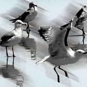 Long_beach_birds_2_posterized_web_card