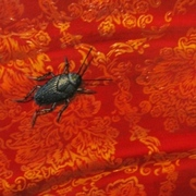 Meg_dwyer_beetle_on_red_art_card