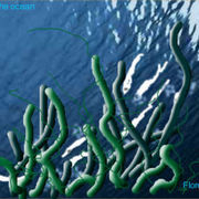 Capture1046141595-lives_in_the_ocean-07_card
