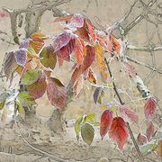 Autumn_study_card