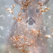 Winter_doe_card