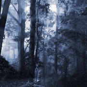 Forest_light_card