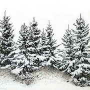 Spruce-trees_in_winter__wc__51_x_37_5_cm_card