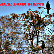 Space_for_rent_card