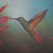 Hummingbird1_card