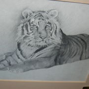 Tiger_drawing_card
