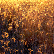 Sunset_grass_card