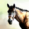 Horse6_thumb