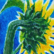 Sunflower_new_art_8-12-09_card