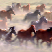 Wildhorses_card
