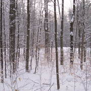 Winter_woods2_card