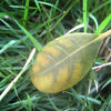Leaf_thumb