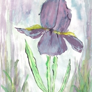 Purple_blue_iris__water_color_9-21-09_by_collette_card