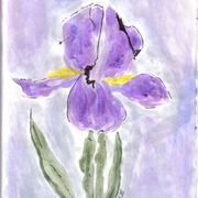 Iris_by_collette
