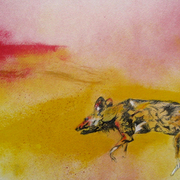 Rare_lone_moment_for_african_wild_dog_9_07_smaller_card