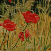 Field_poppies_30x20_card