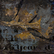 Autumn_textures_card