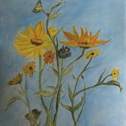 Img_1720_crop_sunflowers_card