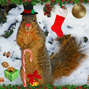 P3092605holiday_squirrel_card