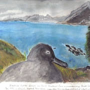 Albatross_11-30-09_by_collette_card