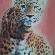 Leopard_now_card